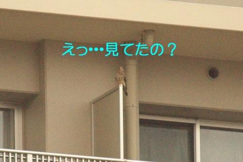 170_2014101319003090d.jpg