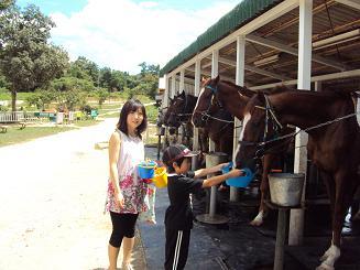 horse26sep2010.jpg