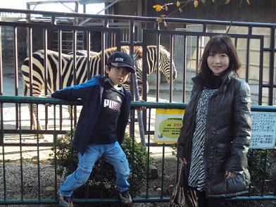 zebra06dec2010.jpg