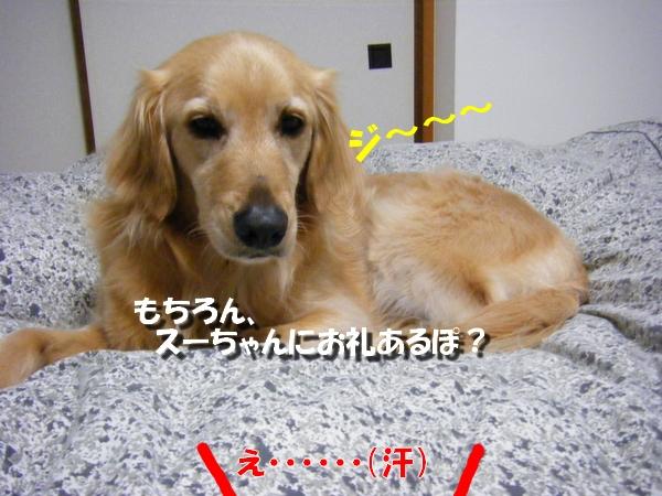 DSCF1005_20110413235122.jpg