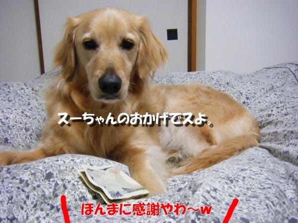 DSCF1006_20110413235121.jpg