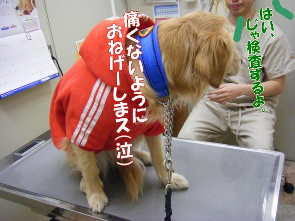 DSCF1057_20111228000657.jpg
