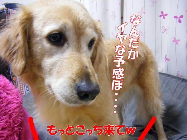 DSCF1108_20120107152004.jpg