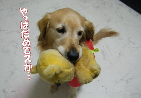 DSCF2064_20111221234607.jpg