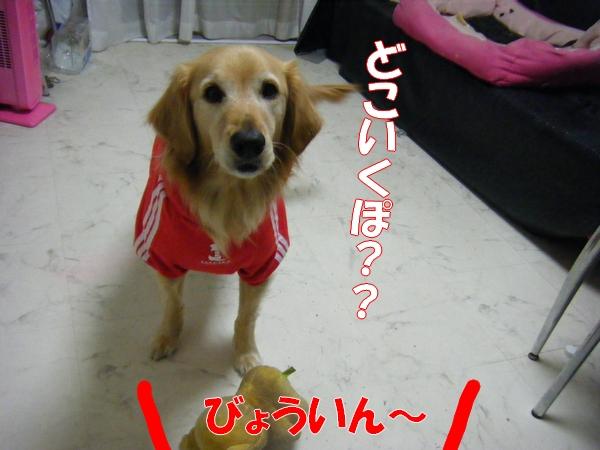 DSCF2069_20111221234606.jpg