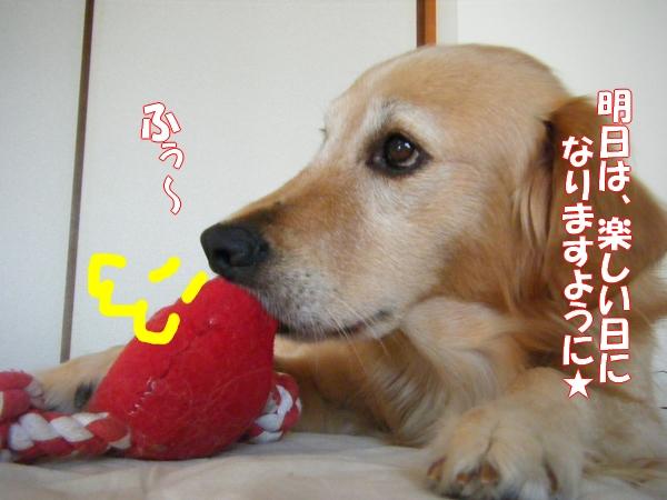 DSCF4019_20111117004742.jpg