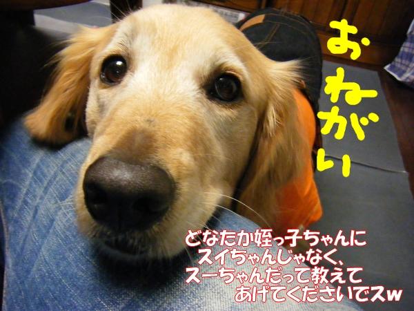 DSCF5015_20120113003650.jpg