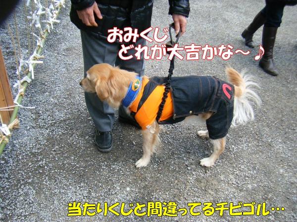 DSCF5038_20120112000118.jpg