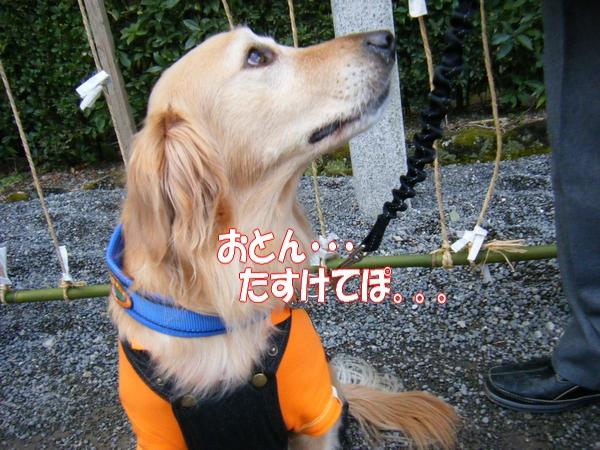 DSCF5044_20120112000116.jpg