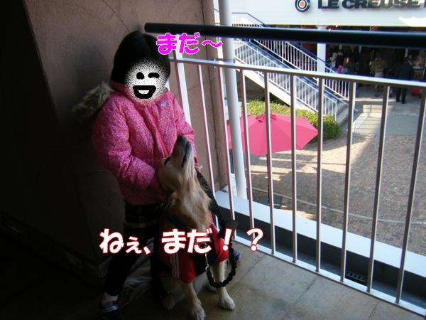 DSCF5073_20120113233340.jpg