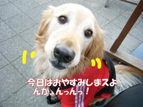 DSCF5077_20120113233338.jpg