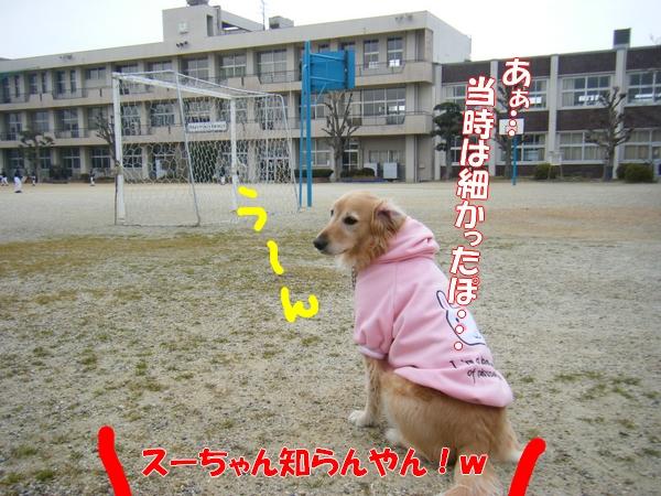 DSCF5101_20120122234925.jpg