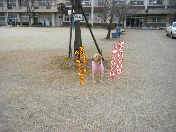DSCF5106_20120122234923.jpg