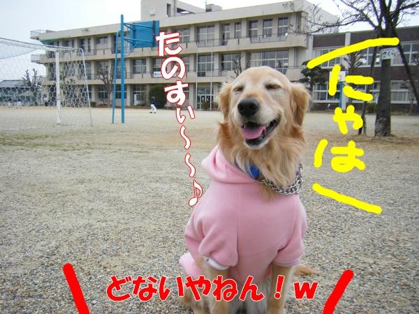 DSCF5113_20120122235030.jpg