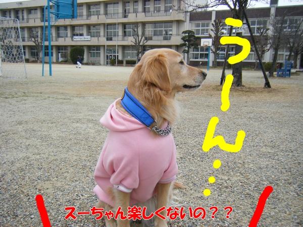 DSCF5115_20120122235029.jpg