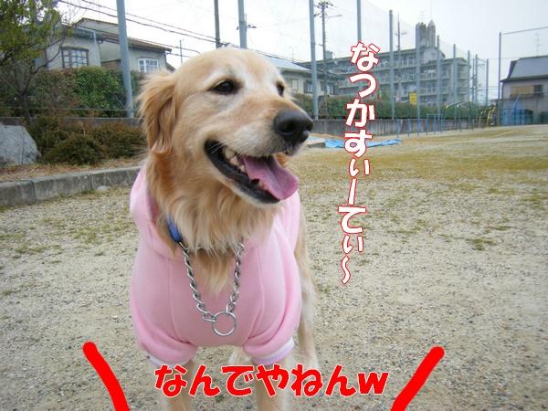 DSCF5119_20120122235029.jpg