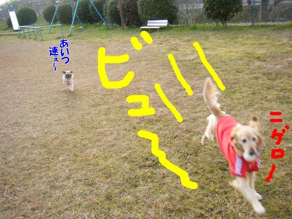 DSCF5141_20120125235214.jpg