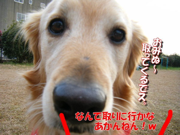 DSCF5154_20120125235211.jpg