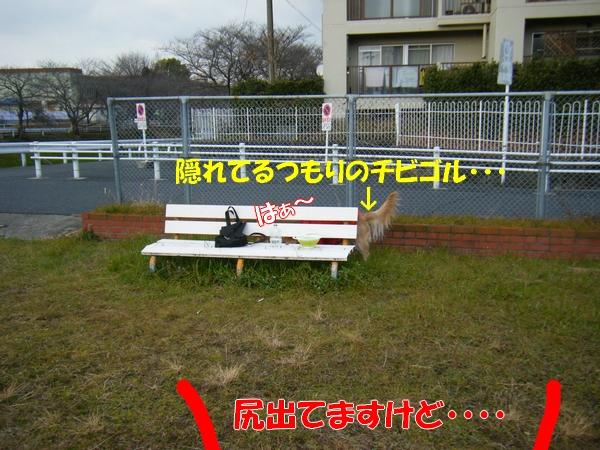 DSCF5170_20120125235316.jpg
