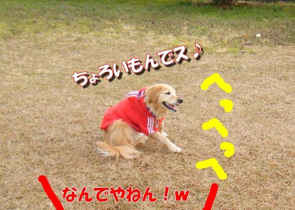 DSCF5174_20120125235316.jpg
