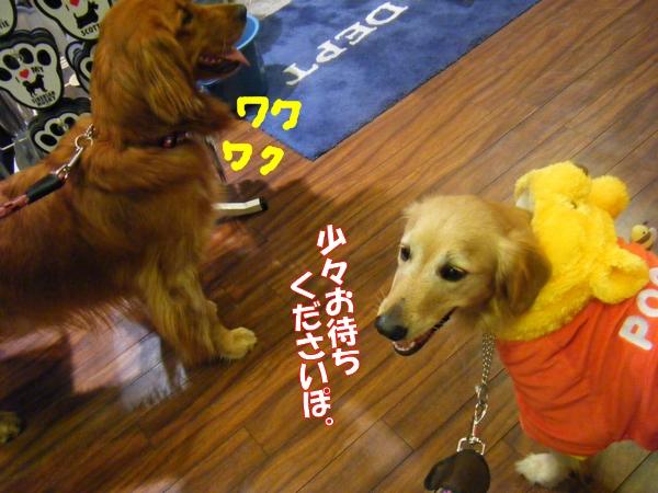 DSCF6091_20111104003901.jpg
