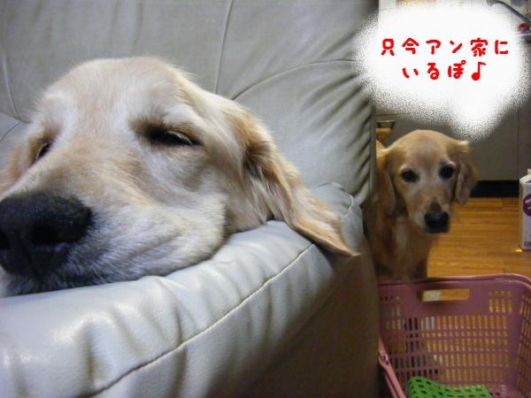 DSCF9008_20111105004033.jpg