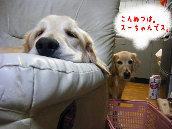 DSCF9009_20111105004033.jpg