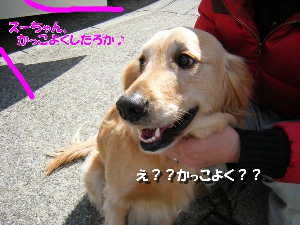 DSCF9010_20110407234851.jpg