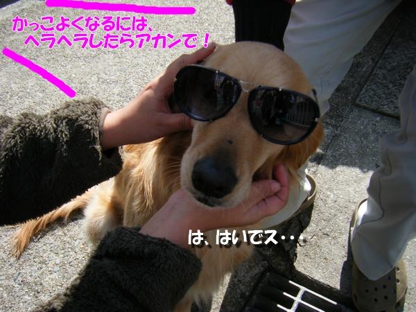 DSCF9011_20110407234850.jpg