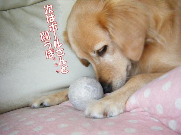 DSCF9016_20111108012243.jpg