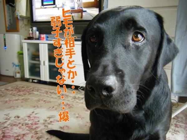 DSCF9027_20111108012241.jpg