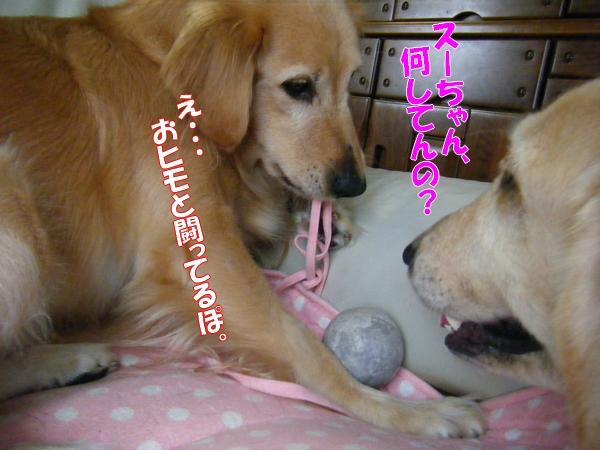 DSCF9028_20111108012240.jpg