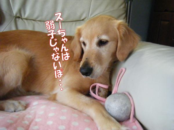 DSCF9035_20111108012339.jpg