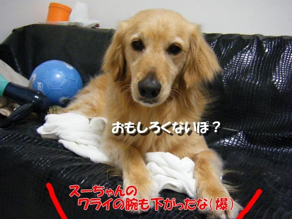 DSCF9074_20110411231940.jpg