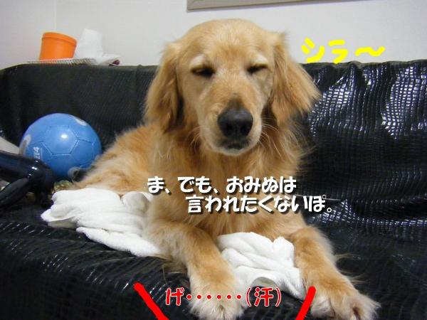 DSCF9075_20110411231939.jpg