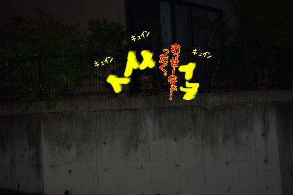 IMGP0015_20111201005702.jpg
