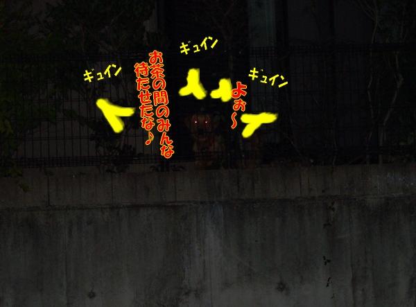 IMGP0016_20111201005700.jpg