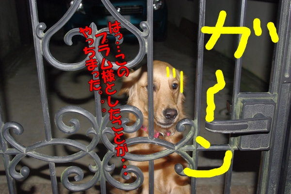 IMGP0026_20111202005722.jpg