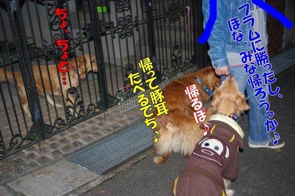 IMGP0030_20111203012606.jpg