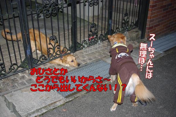 IMGP0031_20111202005720.jpg