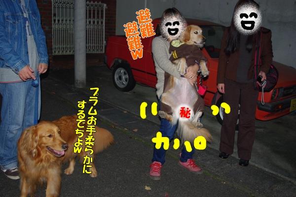 IMGP0038_20111203023556.jpg