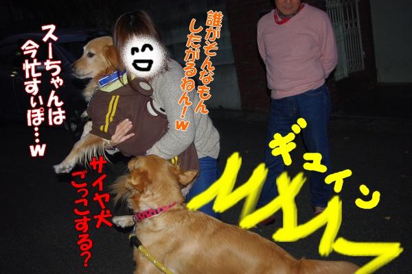 IMGP0056_20111203023555.jpg