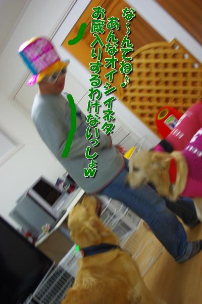 IMGP0244_20111208233905.jpg