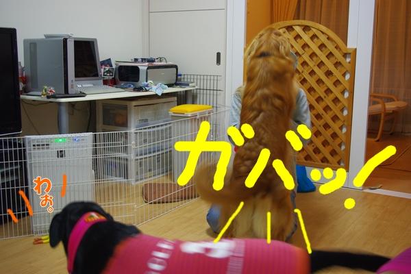 IMGP0256_20111208234014.jpg