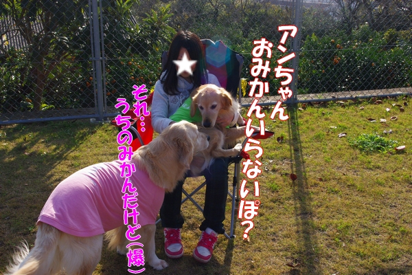 IMGP2208_20111214001342.jpg
