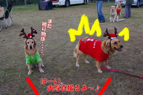 IMGP2521_20111216014536.jpg