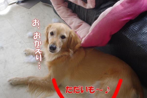 IMGP6210_20111113000959.jpg
