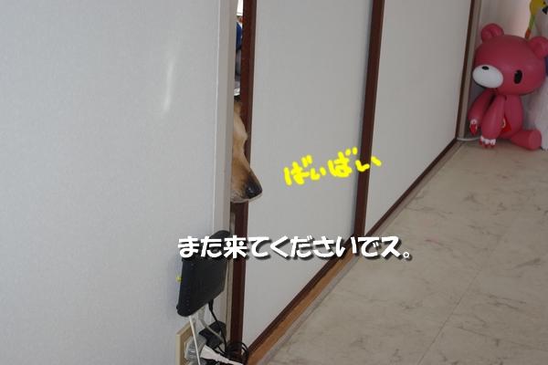 IMGP8280_20110410000835.jpg