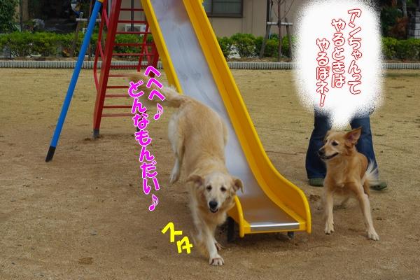 IMGP9075_20111110003653.jpg