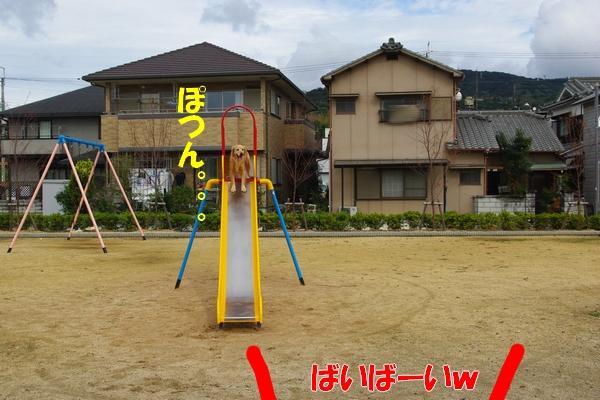 IMGP9088_20111111013748.jpg